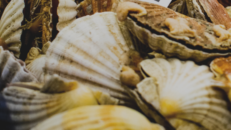 Close up of scallop shells