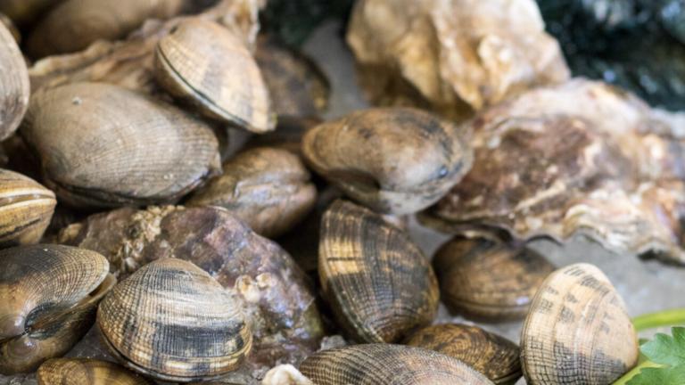 Close up image of shellfish on fish counter