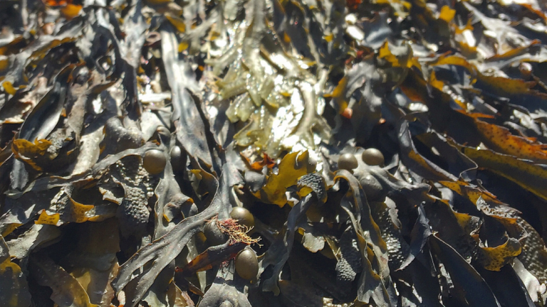Close up of seaweed